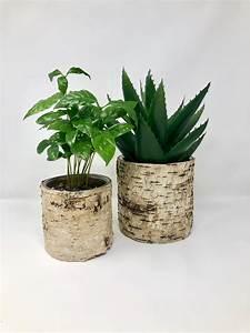 Birch, Pot