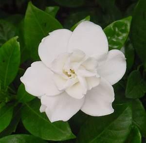 White Flower – WeNeedFun