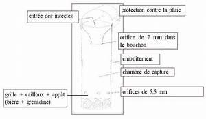 Piege A Frelon : le frelon asiatique l 39 abeille du forez ~ Farleysfitness.com Idées de Décoration