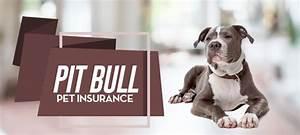 pit bull pet insurance