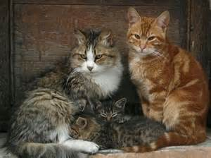 cat family cat family cats and their relatives