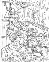 Coloring Lizards Drawn Kathy Lounge Sturr Artist Hands sketch template