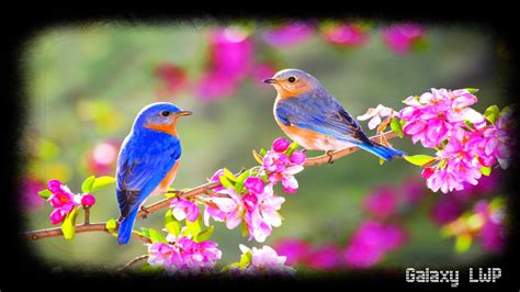 beautifull  birds wallpaper hd wallpapers