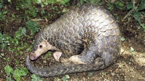 ten  hong kongs  endangered species  animals hunted  tcm   gigantic