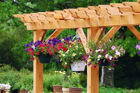 Best Flowers And Plants For Hanging Baskets