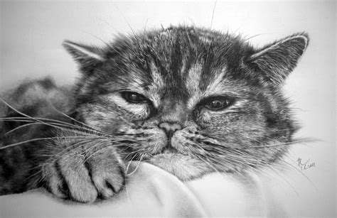 15 Cat Pictures You Won't Believe Are Pencil Drawings