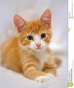Cute Ginger Kitten With Blue Eyes Stock Photo - Image ...