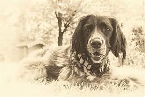 Wie Alt Werden Berner Sennenhunde : wie alt werden hunde issn 39 r de hunde news dogstyle ~ Eleganceandgraceweddings.com Haus und Dekorationen