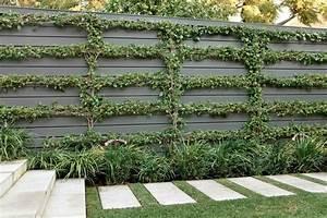 245 best images about Garden~Espalier on Pinterest   Trees ...
