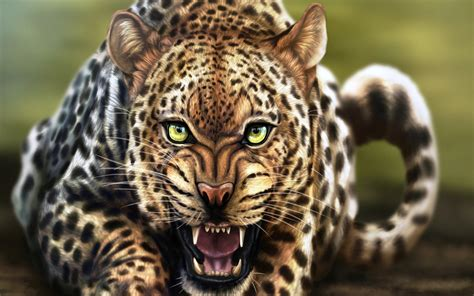 Animal Wallpaper For Desktop Size - angry leopard animal hd desktop wallpaper background