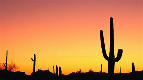 sunrise cactus wallpaper