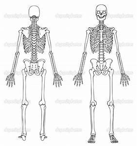 Human Skeleton Unlabeled
