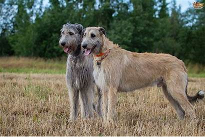 Dog Breeds Types Popularity Changing Pets4homes Pet