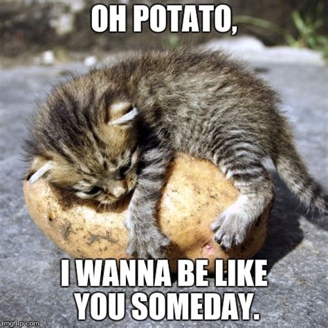 Kitty Meme - your classic kitty meme produced by your favorite nacho material all rights reserved imgflip