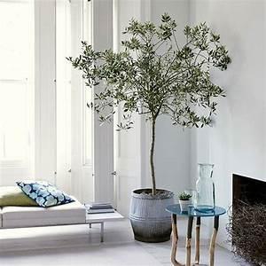 Olivenbaum Im Wohnzimmer überwintern : die besten 25 olivenbaum ideen auf pinterest olivenb umchen olivenpflanze und mediterrane ~ Markanthonyermac.com Haus und Dekorationen
