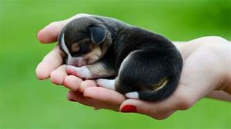Cute Dogs Dont Shed by 50 Cute Dogs Wallpapers Dog Puppy Desktop Wallpapers