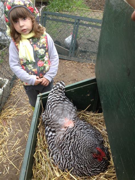 allevamento animali da cortile progetto ecologico settimana 106 allevamento e orto live