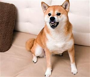 aggression in dogs With aggressive dog behavior