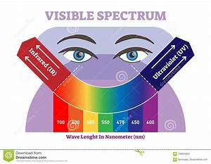 Visible Spectrum Vector Illustration Diagram  Color Scheme