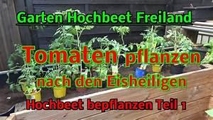 Gurken Im Hochbeet : hochbeet im garten selbstversorgung tomaten pflanzen im freiland nach den eisheiligen youtube ~ Orissabook.com Haus und Dekorationen