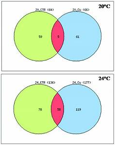 Venn Diagram Representation Of Gene Expression Patterns  The Diagram