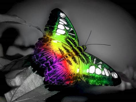 Butterfly Home Screen Wallpaper Images by Butterfly Buetiful Hd Wallpapers Pictures High Quality
