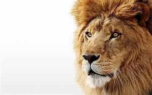 The {Helianthus} Project: Roaring Lion