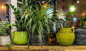 7, Important, Benefits, Of, Keeping, Real, House, Plants, In, Your, Home