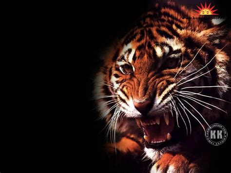 animal wallpapers cute animal wallpapers animal images