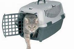 правила провоза домашних кошек в поездах дальнего следования