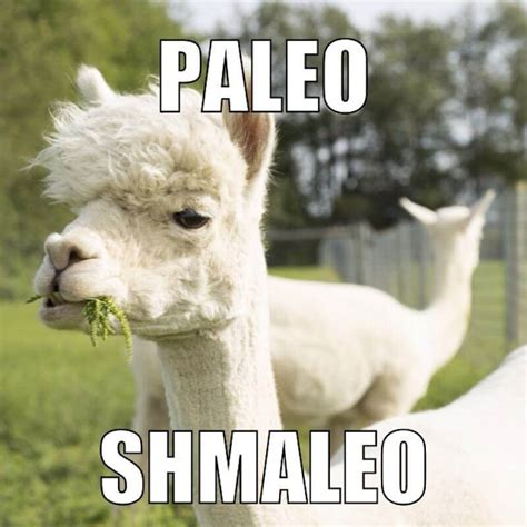 Alpaca Meme These Alpaca Memes Will Make You Feel Warm And Fuzzy