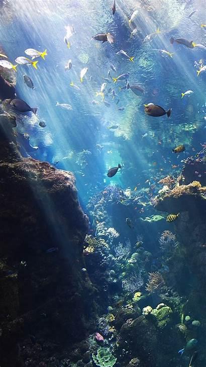 Underwater Ocean Sea Fish Background Lockscreens Island