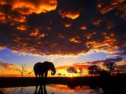 Wallpapers Elefantes Pantalla Fondos Elephant Sunset Elephants