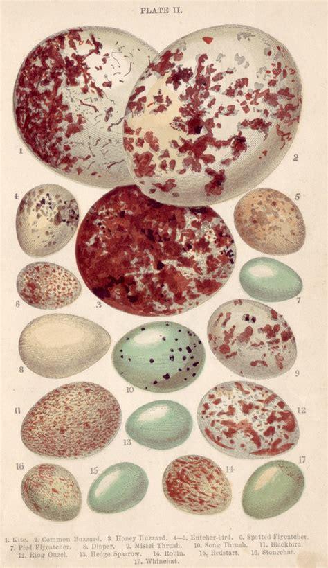 bird egg guide  love  uploaded  pinterest