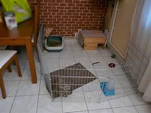 Maison Pour Lapin : guimly est de retour les petits lapins ~ Premium-room.com Idées de Décoration