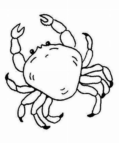 Coloring Sea Animals Crab King Drawing Creature
