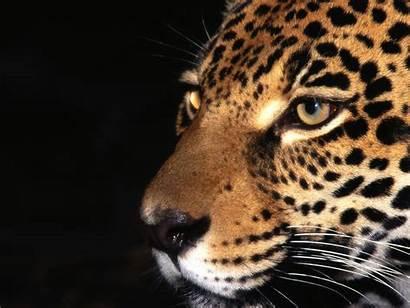 Animal Wild A13 4k Desktop Wallpapers