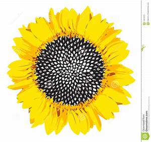 Black And White Sunflower Photography | Clipart Panda ...