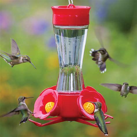 humming bird feeder hummingbird feeders