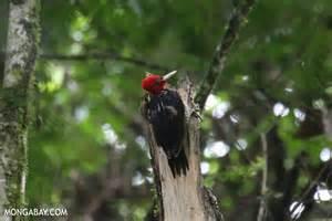 Costa Rica Rainforest Birds