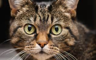 cat faces surprised wallpapers and images wallpapers