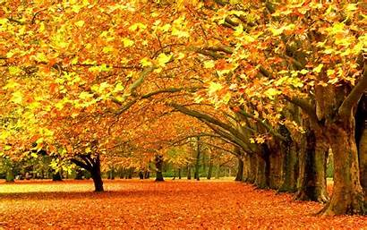 Fall Nature Trees Desktop Backgrounds Wallpapers