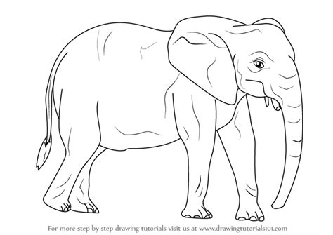 step  step   draw  african elephant