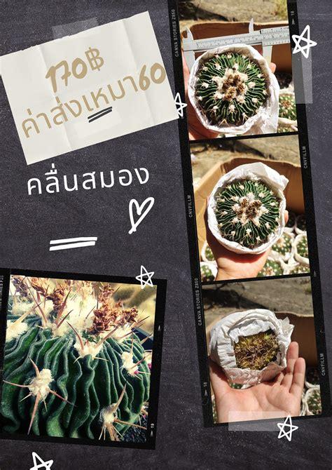 The Wall Cactus จำหน่ายแคคตัสกระบองเพชรฮาโวเทียไม้นำเข้าปลีก-ส่ง - Posts   Facebook