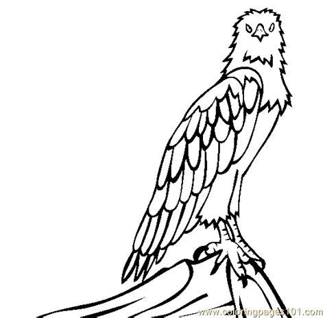 white bellied sea eagle coloring page  eagle