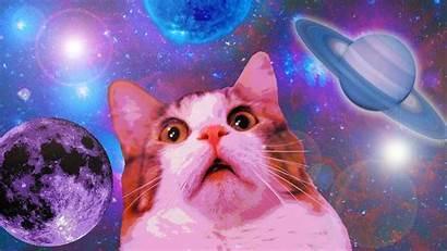 Cat Dank Memes Space Desktop Funny Wallpapers