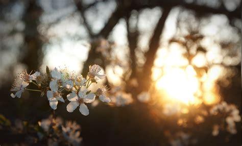 Flowers White Flowers Sunlight Depth Of Field Nature