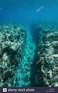 Underwater landscape, a natural trench into the fore reef ...