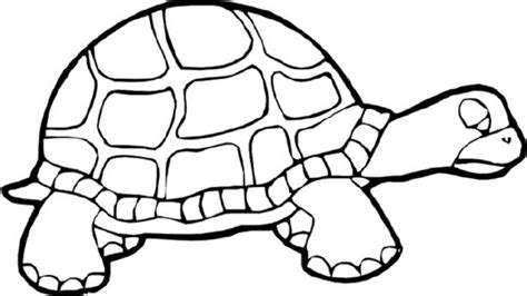 turtle coloring pages bestofcoloringcom