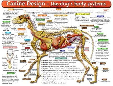 images  dog conditioning injury structure